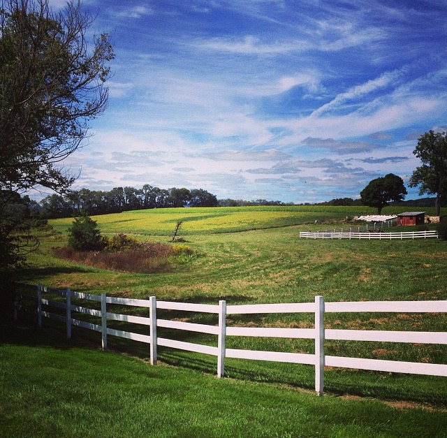 Warriors Path State Park Stables: Mindful Matters