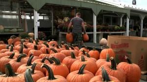 union-pumpkins