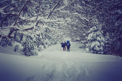 travelers-backpacks-walking-along-road-forest-winter-mountains-view-snow-covered-conifer-trees-60547392